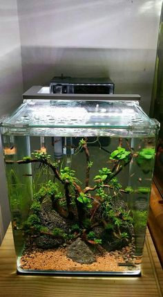 Betta Fish Tank, Aquarium Fish Tank, Planted Aquarium, Amazing Aquariums, Aquarium Landscape, Container Water Gardens, Nano Tank, Cool Fish, Aquarium Design