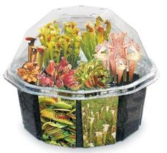 Predator terrarium