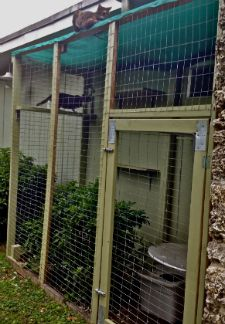 Vetstreet's Dr. Patty Khuly discusses why outdoor cat enclosures are a great idea for indoor cats, as well as how she built one for her own pets.