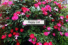 What makes you happy? http://www.treasuretromp.com/2014/07/happy-list/?utm_campaign=coschedule&utm_source=pinterest&utm_medium=Nicole%20%40%20Treasure%20Tromp%20(treasures.)&utm_content=A%20Happy%20List%20%26%20Treat%20Yo'%20Self%20Thursday%20%7Blink-up%20%2330%7D