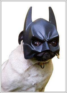 pug costume | Pug in a Batman Mask | My Disguises - We Love Costumes