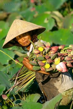 Picking lotus flowers in Hoi An Please like, repin or follow us on Pinterest to have more interesting things. Thanks. http://hoianfoodtour.com/ #hoian #lotus #