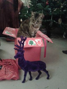 This cat, who has retreated to his safe place away from this purple monstrosity.