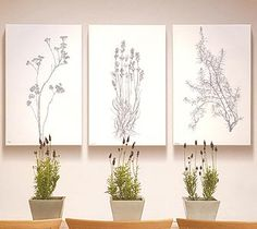 Botanical drawings contemporary art