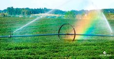 Reduce water usage and finding smarter ways to use resources like water are imperative on a farm. Here are 3 ways farmers Sprinkler Irrigation, Drip Irrigation System, Water Me, Save Water, Slimline Water Tanks, Places Around The World, Around The Worlds, Small Farm, Wal
