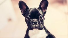 These small dog names will give your pup some serious character