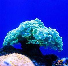 Beautiful Sea Animals   beautiful-sea-animals-14.jpg