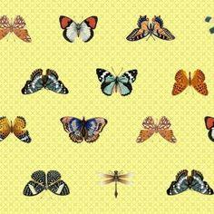 Bombinhas - Borboletas, butterfly