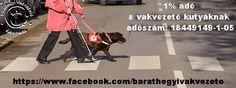 1% a vakvezető kutyáknak!