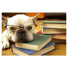 Dog Study Poster