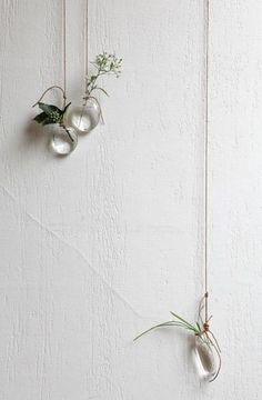 plants in water in small clear glass containers hanging on wall... but…