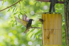 Bird Feeders, Outdoor Decor, Home Decor, Blog, Nest Box, Luxury Villa, Shade Perennials, Hang In There, Decoration Home