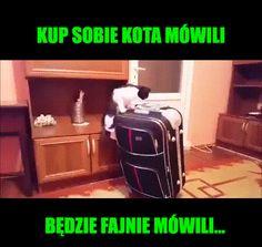 Wtf Funny, Haha, Gifs, Harry Potter, Memes, Ha Ha, Meme, Presents