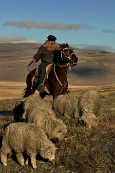 Chilean Sheep Ranch. Patagonia is filled with large ranches. Here a cowboy moves the last of his big herd forward onto new pastures.