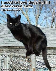 cat animal - Bing images