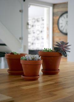 succulents, mehihasvit, terracotta pot, terrakottaruukku