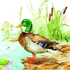 Wildlife Paintings, Animal Paintings, Art Drawings Sketches, Animal Drawings, Bird Illustration, Illustrations, Nicolas Vanier, Duck Art, Cottage Art