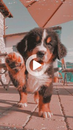 dogs and puppies ; dogs and puppies for sale ; dogs that dont shed ; Cute Baby Dogs, Super Cute Puppies, Baby Animals Super Cute, Cute Little Puppies, Cute Dogs And Puppies, Cute Little Animals, Cute Funny Animals, Doggies, Cute Puppy Pics