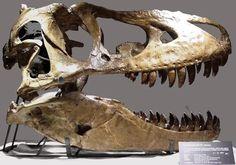 Nicolas Cage y el misterio del cráneo robado de dinosaurio