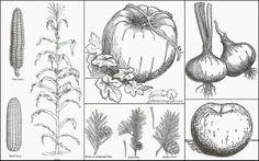 Pumpkin, Apple, Corn...Harvest Clip Art ~~~via Knick of Time Interiors