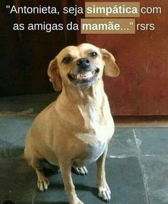 Minha cachorrinha quando chega as visitas… How my dog ​​behaves when the visitors arrive … Animals And Pets, Funny Animals, Cute Animals, Pet Puppy, Pet Dogs, Funny Dogs, Funny Memes, Dog Rooms, Animal Memes
