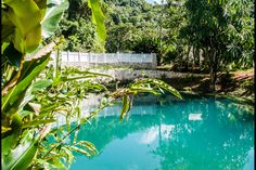 Logement entier à Roaring River Jamaica (Jamaïque). Guests should be aware that our internet is weak and erratic ,due to our location, and cannot be counted upon for serious business purposes. Blue Hole, Jamaica, Gardens, River, Outdoor Decor, Home Decor, Negril Jamaica, Decoration Home, Room Decor