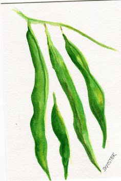 Original Green Beans watercolor painting by SharonFosterArt, $10.00