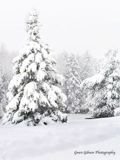 Winter Picture Landscape Photography Wall by GwenGibsonPhotograph Winter Szenen, Winter Love, Winter Storm, Winter Snow Pictures, Snow Images, Snowy Trees, Photos Voyages, Snow Scenes, Landscape Pictures
