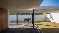 A spiral staircase made from cast concrete leads up to a turfed roof overlooking a pool and polo field at this stables near Buenos Aires, which was designed by local firm Estudio Ramos for a professional polo player Concept Architecture, Residential Architecture, Architecture Design, Archdaily Mexico, Free Standing Wall, Polo Horse, Spiral Staircase, Exotic Pets, Exotic Animals