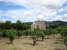 Puglia / Rodi Garganico, Italy