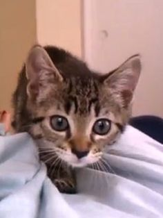 Feel-Good Video of the Week: Sneaky Kitten Attacks the Camera