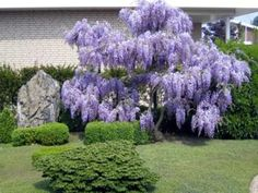 Plant Encyclopedia | Index of Plants and Trees for Landscaping