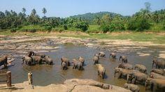 Sri Lanca, Pinnawala Elephant Orphanage