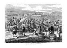 http://www.revue-openfield.net/2013/06/23/evolution-de-la-pratique-paysagiste-face-a-la-question-agricole/