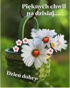 Good Morning, Plants, Inspiration, Humor, Motto, Owl, Pictures, Polish, Bom Dia