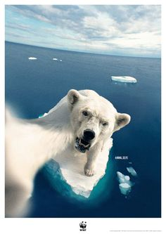 André H. Creative Advertising, Japan Advertising, Ads Creative, Advertising Design, Wwf Poster, Save Nature, Protest Posters, Campaign Posters, Best Ads