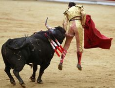 WHEN THE BULL GORES THE MATADOR.   HOPE HE FOUND THE RIGHT STOP!