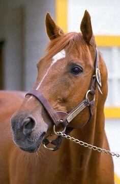 Secretariat stands outside stables at Claiborne Stud Farm.