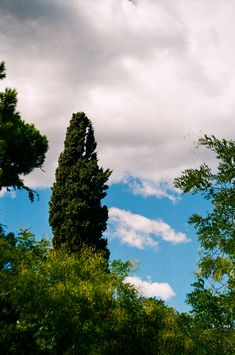 A Tree and a Cloud
