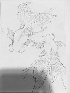 20 Types of Goldfish for Aquarium (Oranda, Shubunkin, Bubble Eye, Etc) Koi Fish Drawing, Fish Drawings, Animal Drawings, Art Drawings, Sketches Of Animals, Koi Art, Fish Art, Koi Kunst, Arte Sketchbook