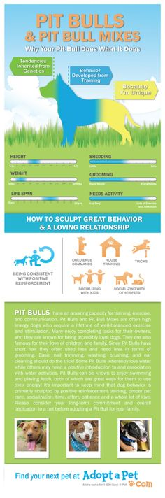 Are you owned by a pit bull? This infographic is for you!