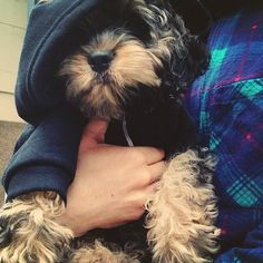 puppy hoodies!!!  i know what muffin is getting for christmas this year!! | american apparel