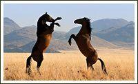 Klein-Aus Vista - Namiba: Wild Horses of the Namib