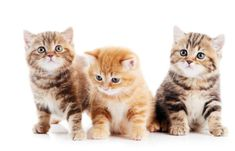Making the decision to become a cat breeder in PA is a big one. It's best if you have a genuine passion for the breed you want to breed. It also helps to be amicable with the breed. #CatBreeder #Breeder #PABreeder Little Kittens, Kittens Cutest, Cats And Kittens, Happy Kitten, Kitten Gif, Kitten Growth Chart, Taking Care Of Kittens, 6 Week Old Kitten, World Cat Day