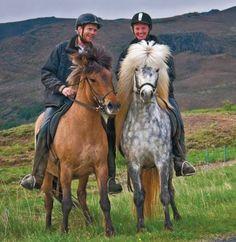 icelandic horses  www.ilove.is - visit us :-)