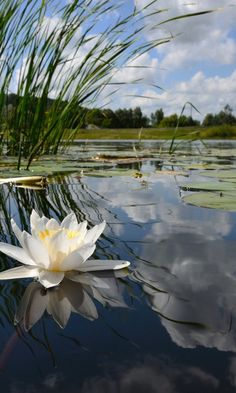Beautiful Flower Pictures – My Honeys Place Pictures of Beautiful Flowers. I love beautiful flowers. Lotus Flower Pictures, Beautiful Flowers Pictures, Nature Pictures, Lily Pond, Arte Floral, Exotic Flowers, Lotus Flowers, Amazing Nature, Beautiful Landscapes