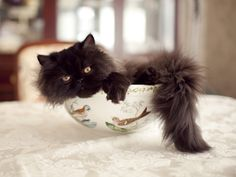 {kitty in a bowl} this never gets old.