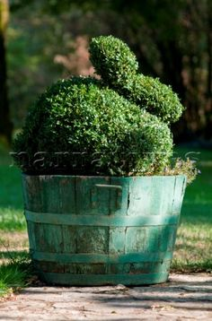 Bunny topiary. You need lots of patience but you could keep this container adding charm to your garden all year round.