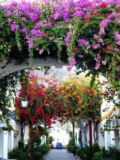 Bougainvillea in Mallorca, Spain. Beautiful World, Beautiful Gardens, Beautiful Flowers, Beautiful Places, Colorful Flowers, Flower Archway, Gazebos, Menorca, Plantation