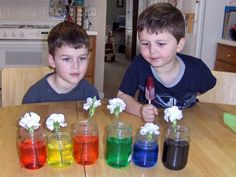 I remember those rainbow flowers at every science fair- here's how April Preschool, Preschool Garden, Preschool Themes, Preschool Science, Preschool Lessons, Science Fair, Science Lessons, Girl Scout Badges, Girl Scout Troop